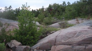 Image of rocks and small conifer trees